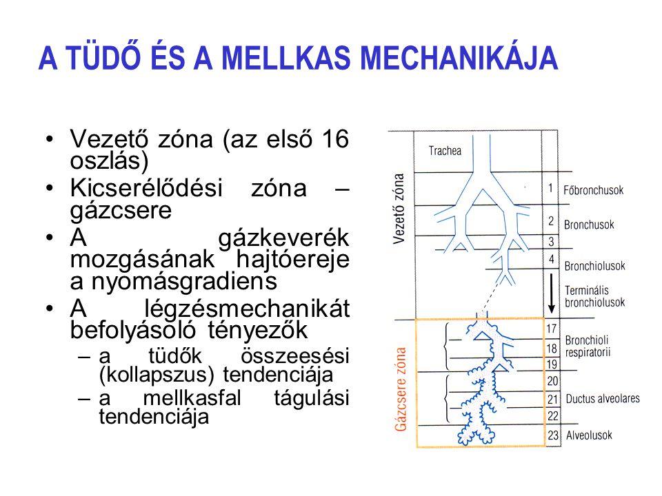 A tüdő ventillációja (légzési perctérfogat) A légzési perctérfogat (V E ) egy légvétel nagyságának (VT) és a légzésszámnak a szorzata (f): V E = VT  f A pihenő, nyugodt felnőtt ember légzése szabályos ritmusú, automatizált, általában nem tudatosul.