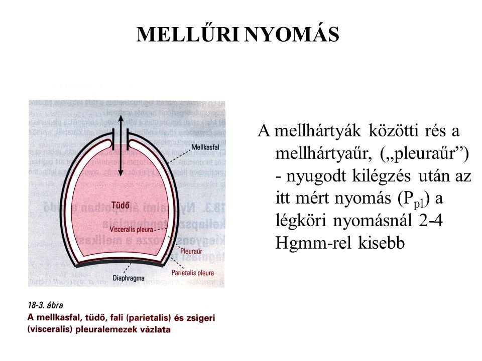 Az alveolusban lévő levegő és a vérben oldott gázok parciális nyomása NYOMÁSGRÁDIENST hoz létre.