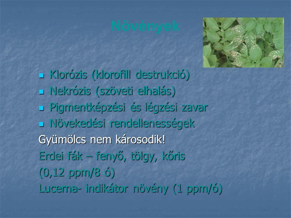 A savas eső virágban okozott kártétele www.images.google.com A kártétel az alsó, csapadéknak jobban kitett szirmokon erősebb.