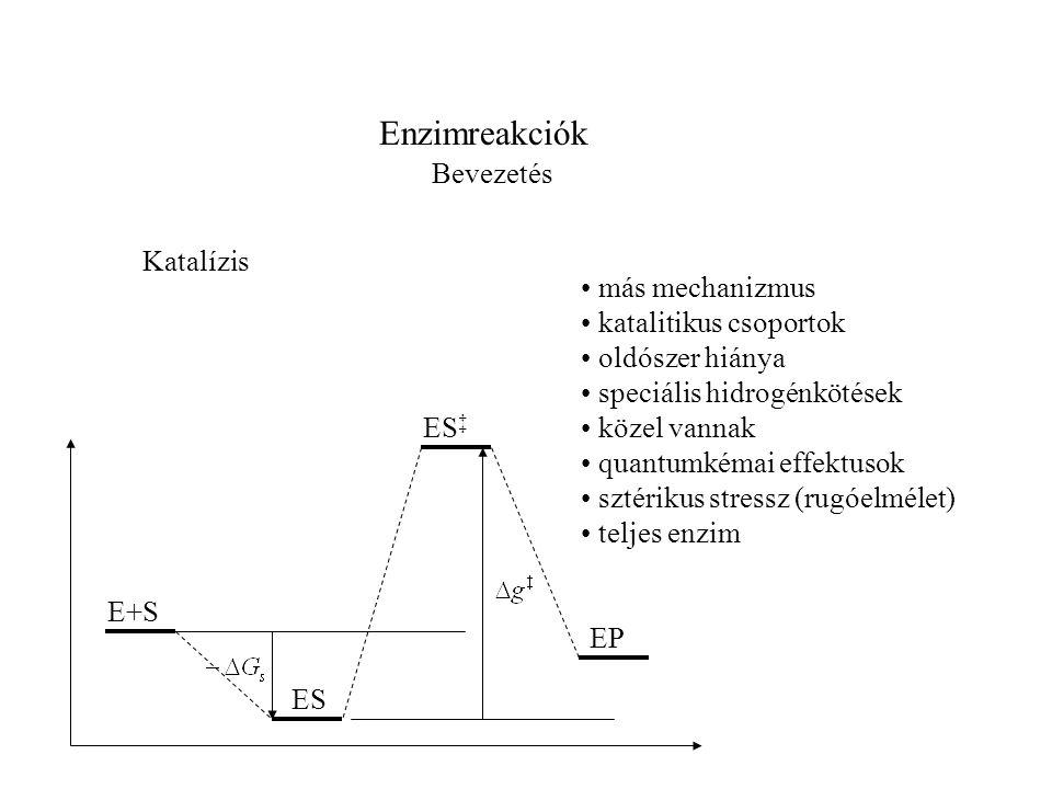 Enzimreakciók Bevezetés más mechanizmus katalitikus csoportok oldószer hiánya speciális hidrogénkötések közel vannak quantumkémai effektusok sztérikus stressz (rugóelmélet) teljes enzim Katalízis E+S ES ES ‡ EP