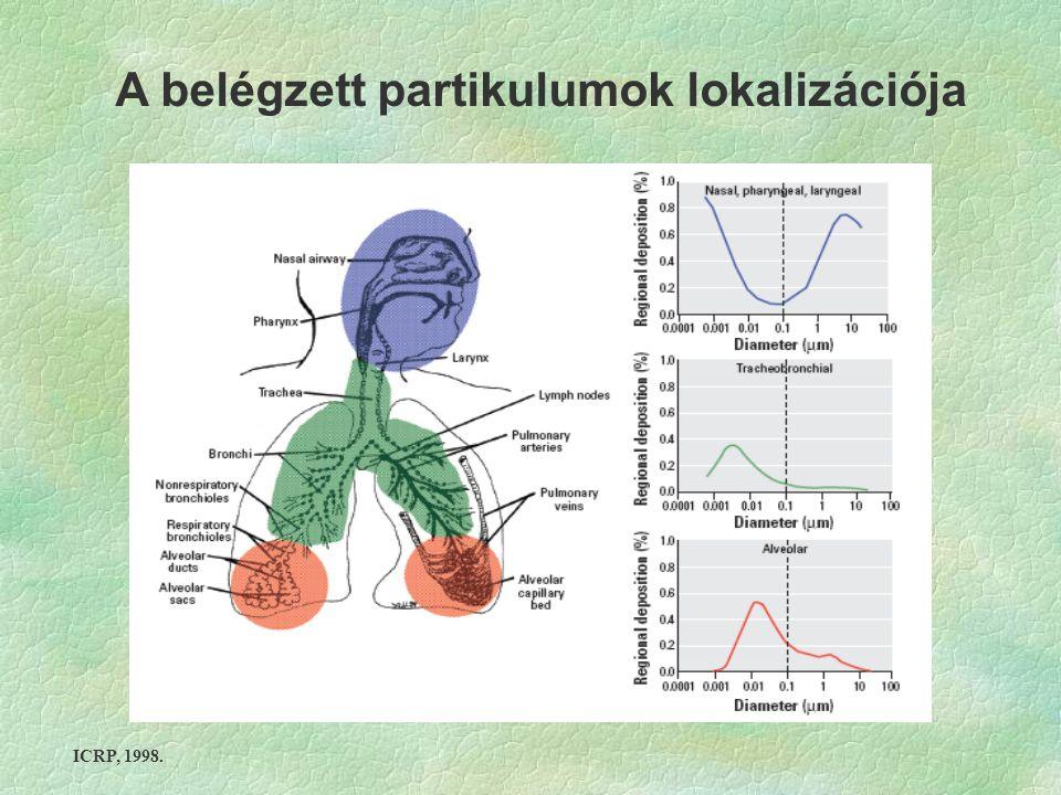 ICRP, 1998. A belégzett partikulumok lokalizációja