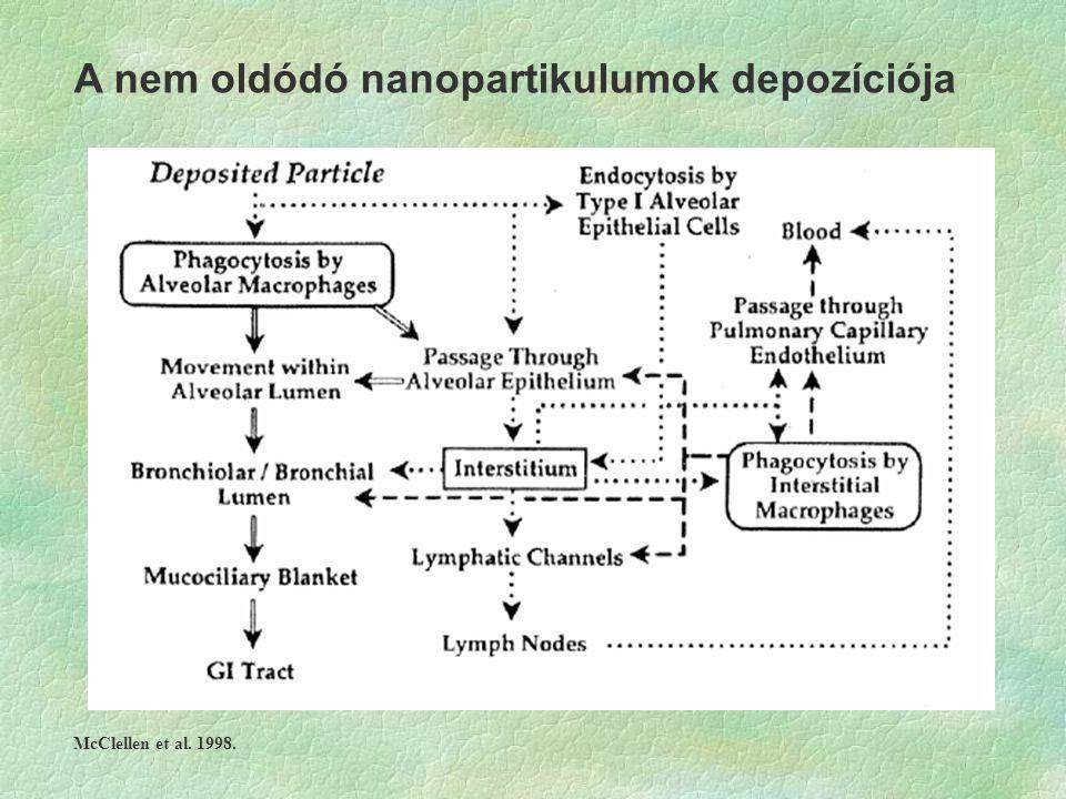 A nem oldódó nanopartikulumok depozíciója McClellen et al. 1998.