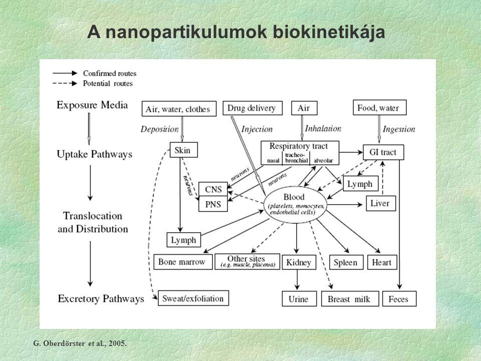 A nanopartikulumok biokinetikája G. Oberdörster et al., 2005.