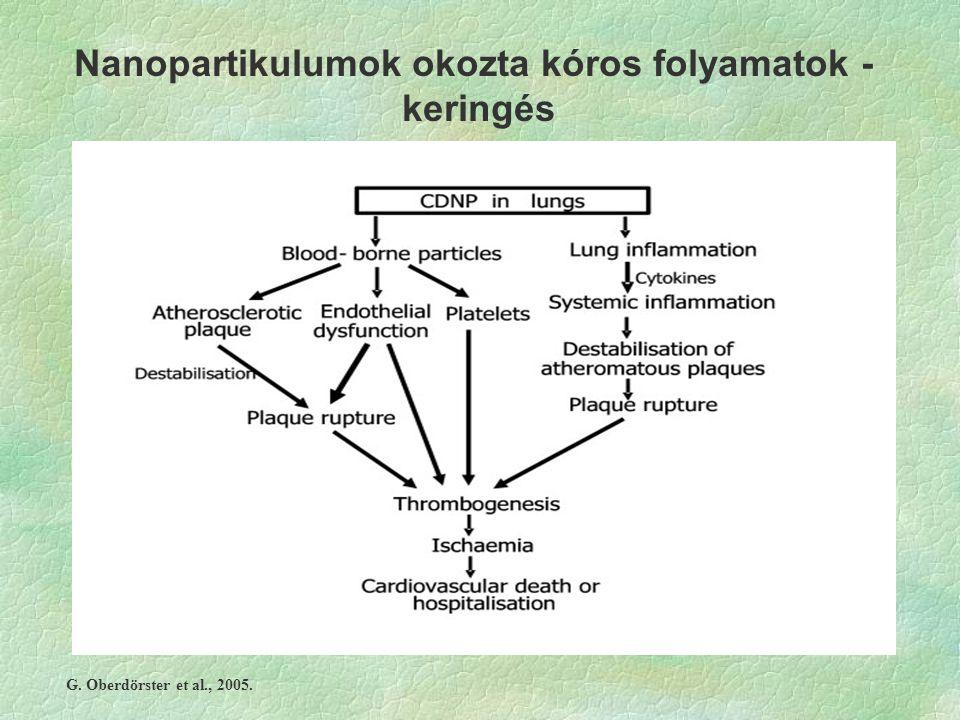 Nanopartikulumok okozta kóros folyamatok - keringés G. Oberdörster et al., 2005.