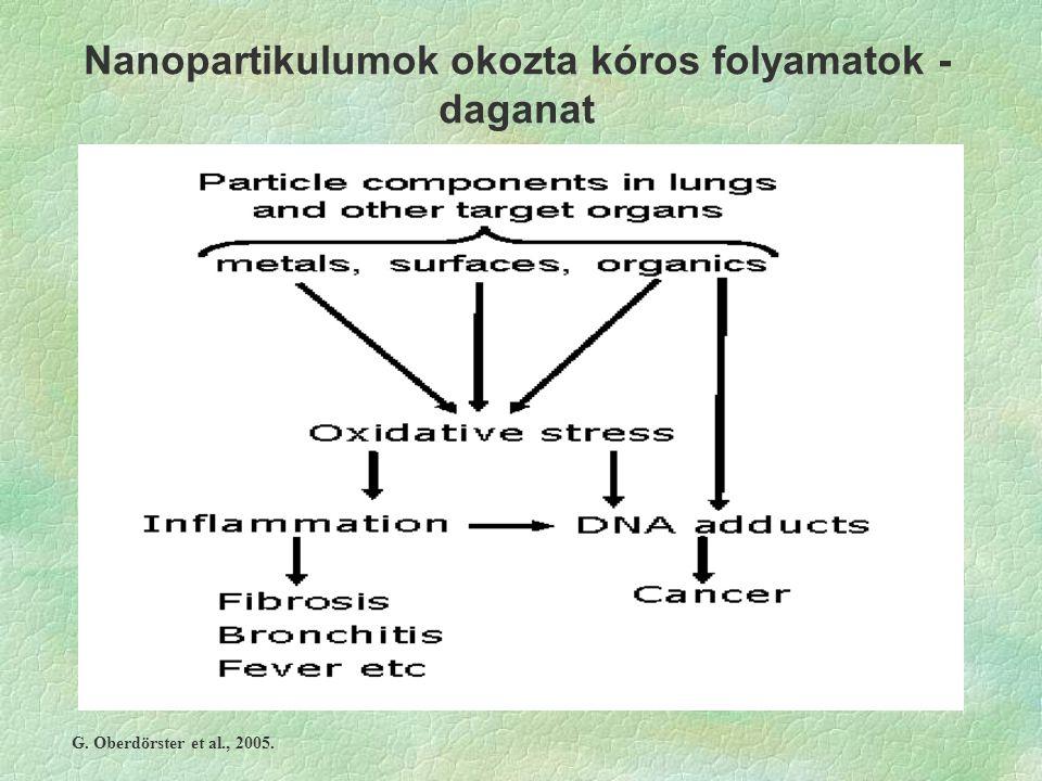 Nanopartikulumok okozta kóros folyamatok - daganat G. Oberdörster et al., 2005.