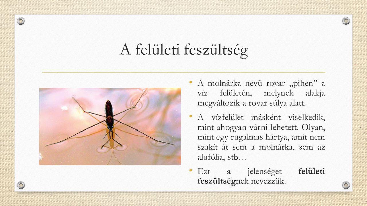 """A felületi feszültség A molnárka nevű rovar """"pihen"""" a víz felületén, melynek alakja megváltozik a rovar súlya alatt. A vízfelület másként viselkedik,"""