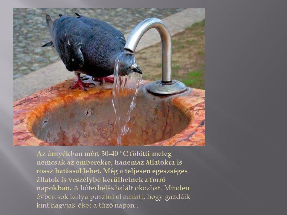 Az árnyékban mért 30-40 °C fölötti meleg nemcsak az emberekre, hanemaz állatokra is rossz hatással lehet. Még a teljesen egészséges állatok is veszély