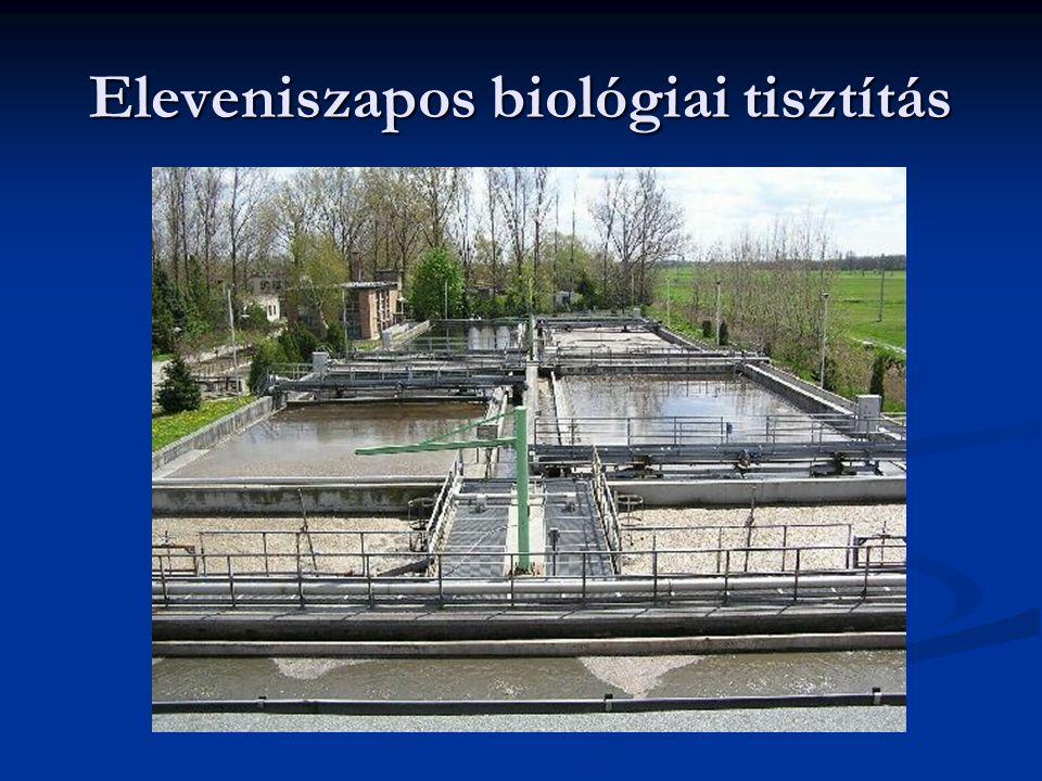 Eleveniszapos biológiai tisztítás