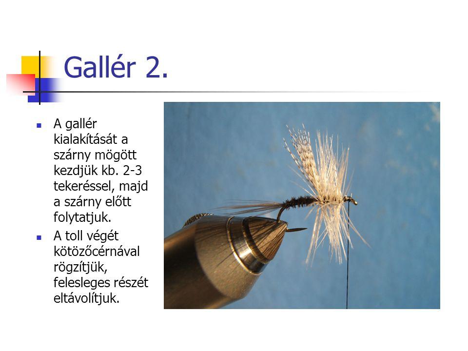 Gallér 2. A gallér kialakítását a szárny mögött kezdjük kb.