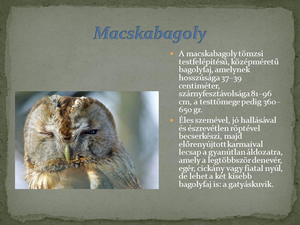 A macskabagoly tömzsi testfelépítésű, középméretű bagolyfaj, amelynek hosszúsága 37–39 centiméter, szárnyfesztávolsága 81–96 cm, a testtömege pedig 360– 650 gr.