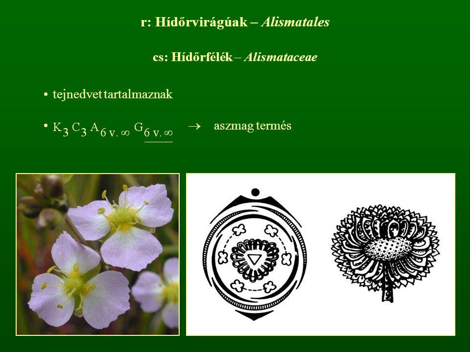 r: Hídőrvirágúak – Alismatales cs: Hídőrfélék – Alismataceae tejnedvet tartalmaznak  aszmag termés