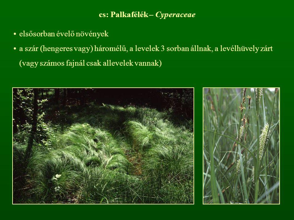 cs: Palkafélék – Cyperaceae elsősorban évelő növények a szár (hengeres vagy) háromélű, a levelek 3 sorban állnak, a levélhüvely zárt (vagy számos fajn