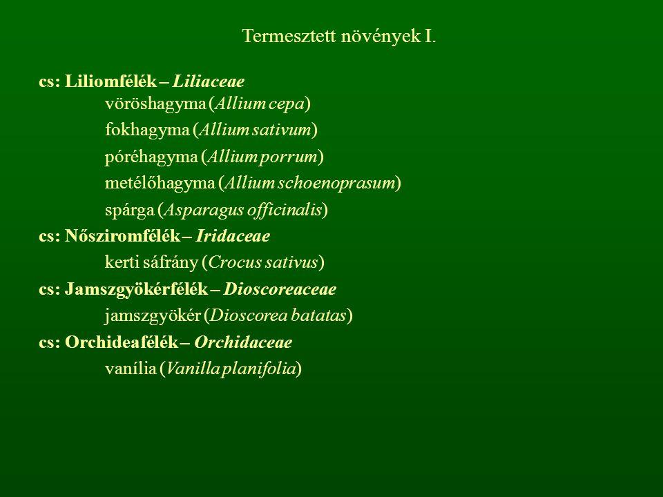 Termesztett növények I. cs: Liliomfélék – Liliaceae vöröshagyma (Allium cepa) fokhagyma (Allium sativum) póréhagyma (Allium porrum) metélőhagyma (Alli