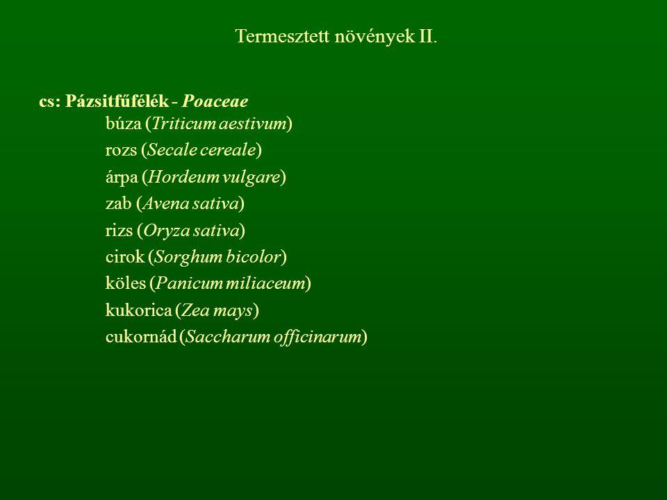 Termesztett növények II. cs: Pázsitfűfélék - Poaceae búza (Triticum aestivum) rozs (Secale cereale) árpa (Hordeum vulgare) zab (Avena sativa) rizs (Or