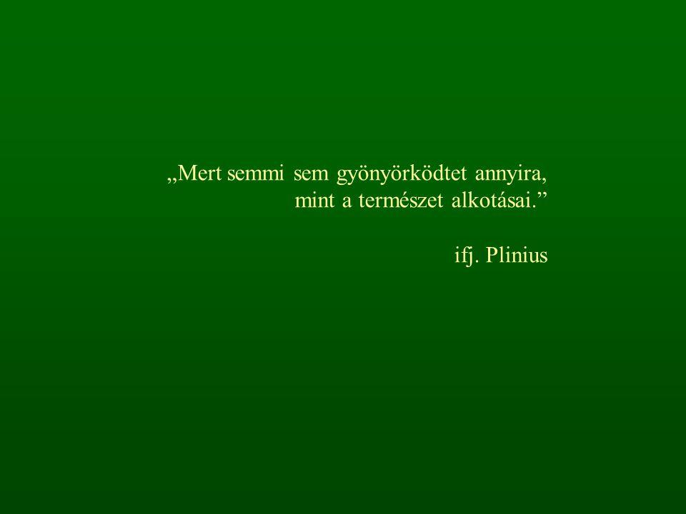 """""""Mert semmi sem gyönyörködtet annyira, mint a természet alkotásai."""" ifj. Plinius"""