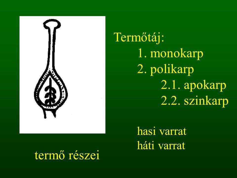termő részei bibe bibeszál magház Termőtáj: 1. monokarp 2. polikarp 2.1. apokarp 2.2. szinkarp hasi varrat háti varrat