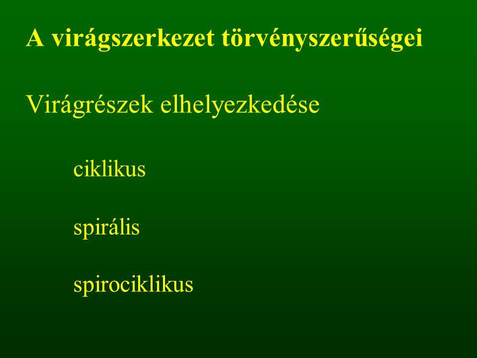 A virágszerkezet törvényszerűségei Virágrészek elhelyezkedése ciklikus spirális spirociklikus
