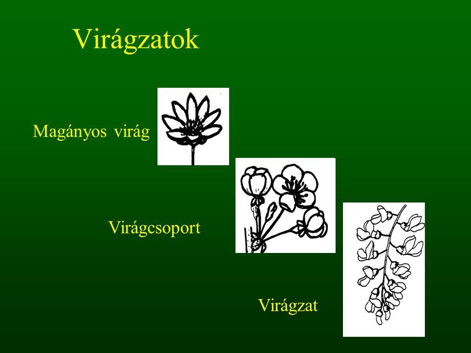 Virágzatok Magányos virág Virágcsoport Virágzat