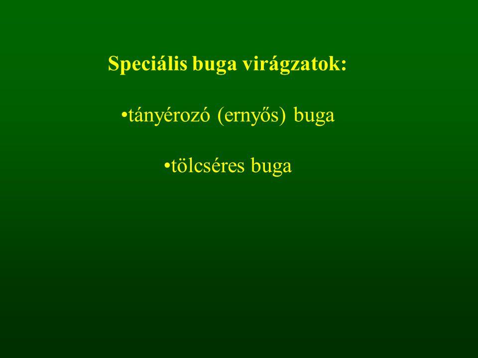 Speciális buga virágzatok: tányérozó (ernyős) buga tölcséres buga