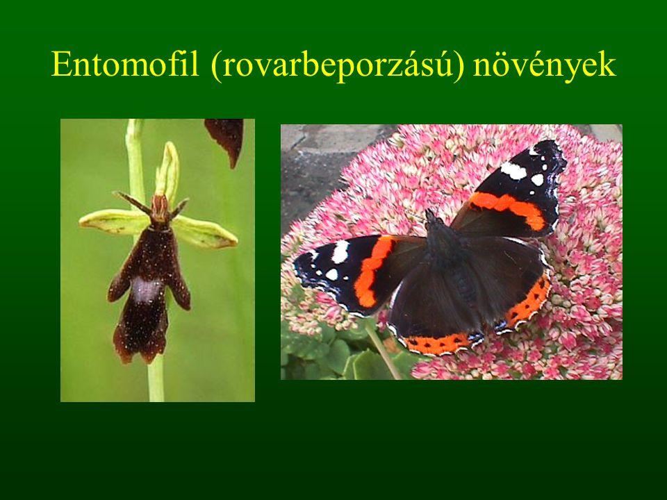 Entomofil (rovarbeporzású) növények