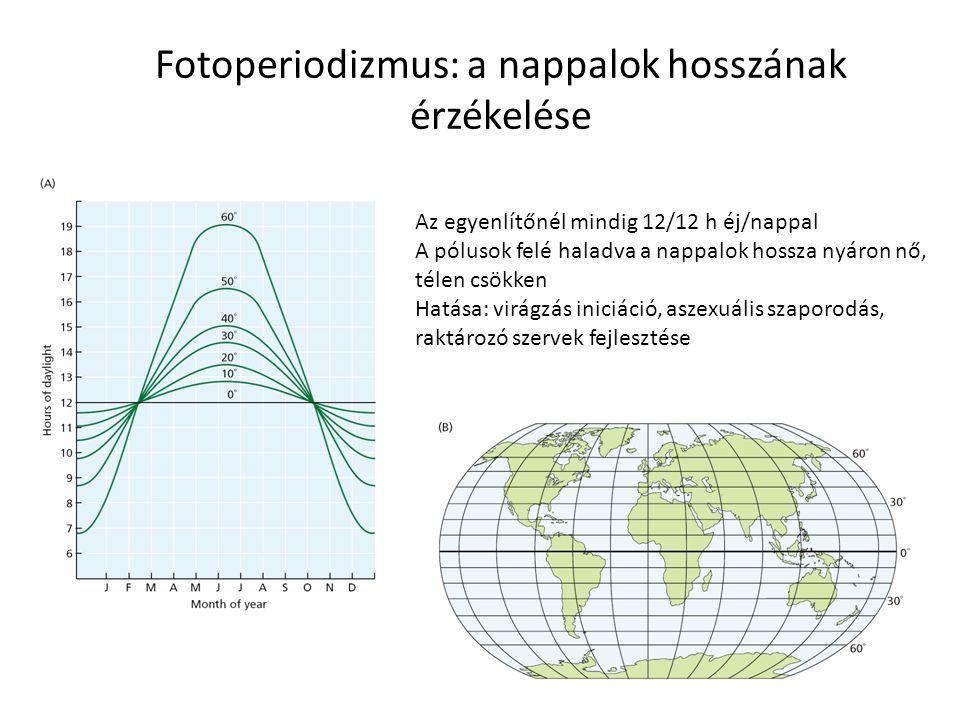 Fotoperiodizmus: a nappalok hosszának érzékelése Az egyenlítőnél mindig 12/12 h éj/nappal A pólusok felé haladva a nappalok hossza nyáron nő, télen cs