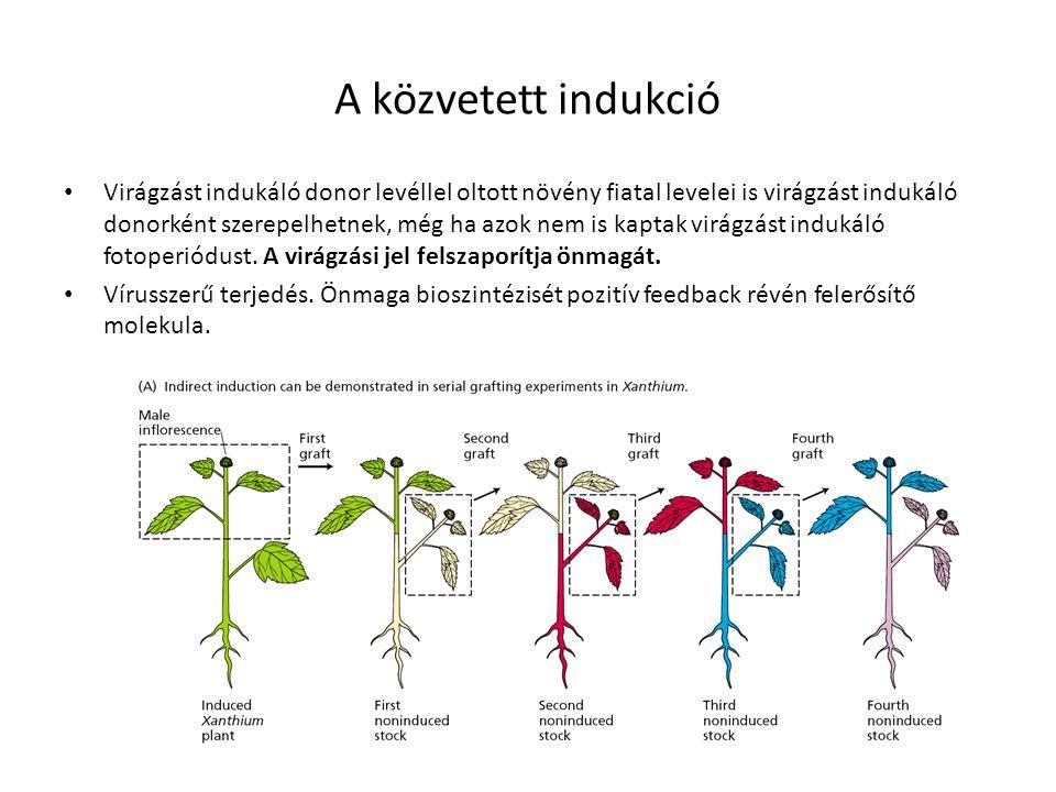 A közvetett indukció Virágzást indukáló donor levéllel oltott növény fiatal levelei is virágzást indukáló donorként szerepelhetnek, még ha azok nem is