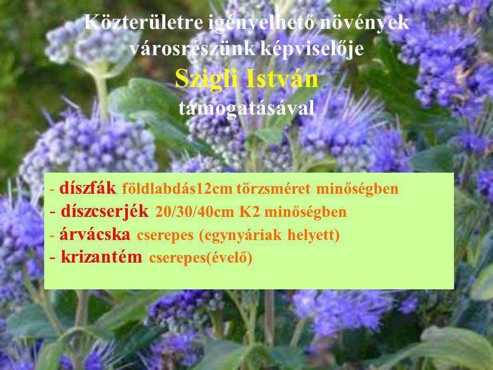 Közterületre igényelhető növények városrészünk képviselője Szigli István támogatásával - díszfák földlabdás12cm törzsméret minőségben - díszcserjék 20