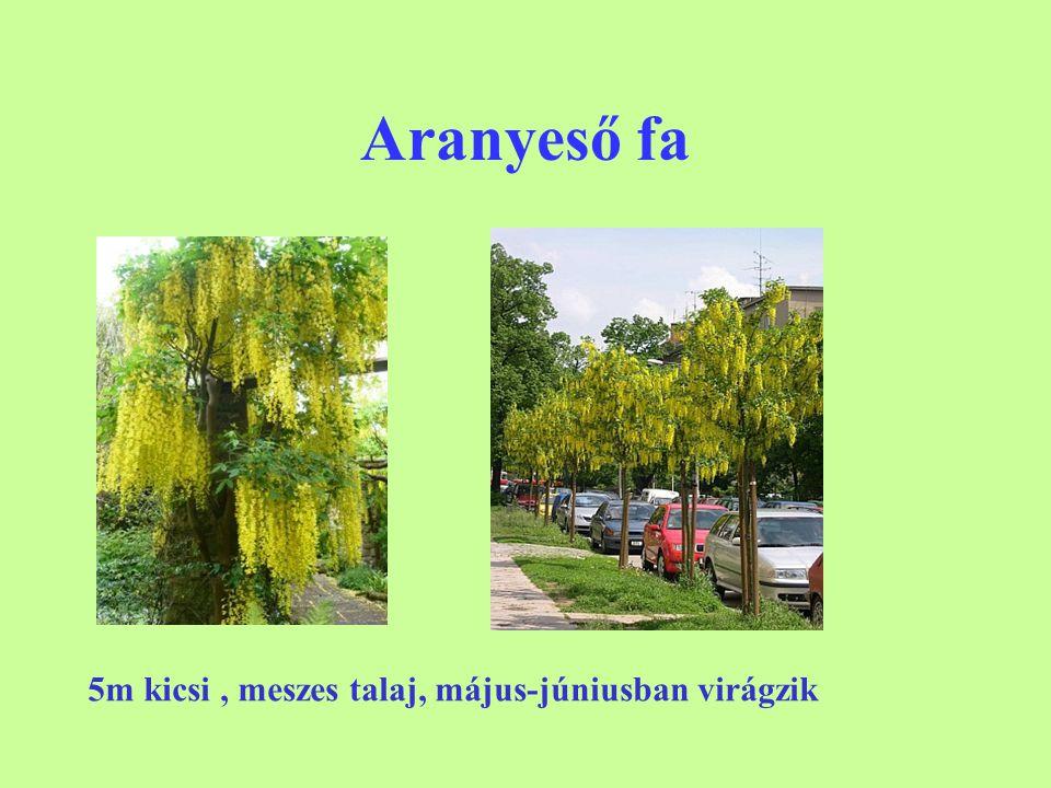Aranyeső fa 5m kicsi, meszes talaj, május-júniusban virágzik