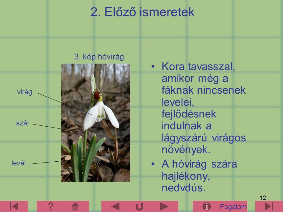 12 2. Előző ismeretek Kora tavasszal, amikor még a fáknak nincsenek levelei, fejlődésnek indulnak a lágyszárú virágos növények. A hóvirág szára hajlék