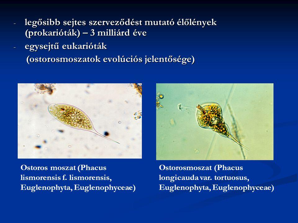 - legősibb sejtes szerveződést mutató élőlények (prokarióták) – 3 milliárd éve - egysejtű eukarióták (ostorosmoszatok evolúciós jelentősége) (ostorosm