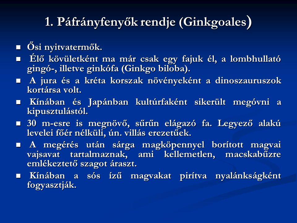 1. Páfrányfenyők rendje (Ginkgoales ) Ősi nyitvatermők. Ősi nyitvatermők. Élő kövületként ma már csak egy fajuk él, a lombhullató gingó-, illetve gink