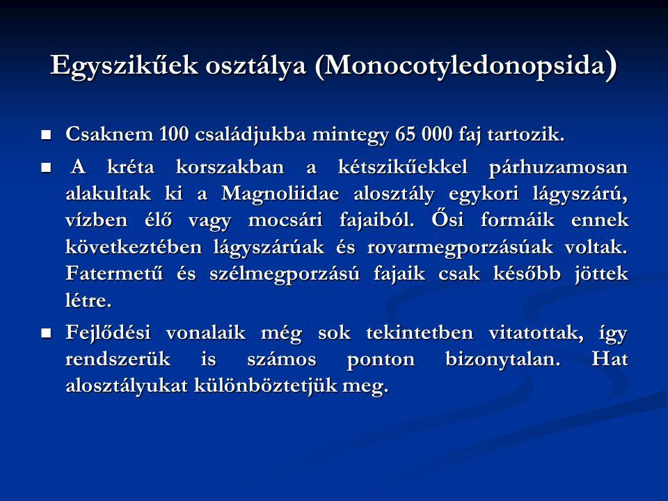 Egyszikűek osztálya (Monocotyledonopsida ) Csaknem 100 családjukba mintegy 65 000 faj tartozik. Csaknem 100 családjukba mintegy 65 000 faj tartozik. A