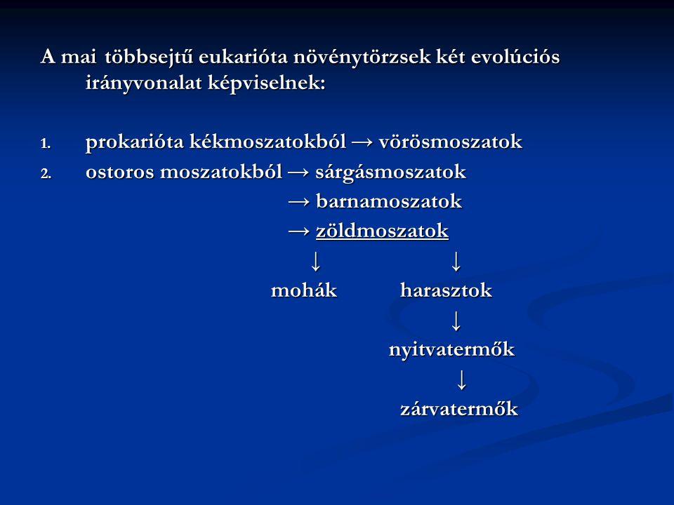 A mai többsejtű eukarióta növénytörzsek két evolúciós irányvonalat képviselnek: 1. prokarióta kékmoszatokból → vörösmoszatok 2. ostoros moszatokból →
