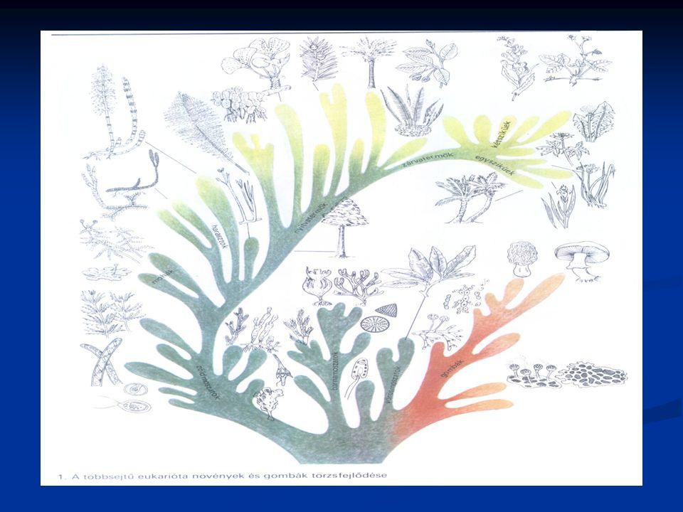 Algák - nem képviselnek egységes rendszertani csoportot - fotoszintézist folytató, gyökerekkel és edénynyalábokkal nem rendelkező, szárra és levélre nem tagolódó, telepes testű szervezetek - tápláléklánc termelői - a Föld oxigén termelésének jelentős részét adják - takarmányozásra alkalmasak - emberi táplálék → jövő táplálkozása - szennyvíztisztításban szerepet játszanak - szélsőséges körülmények között is megtalálhatók