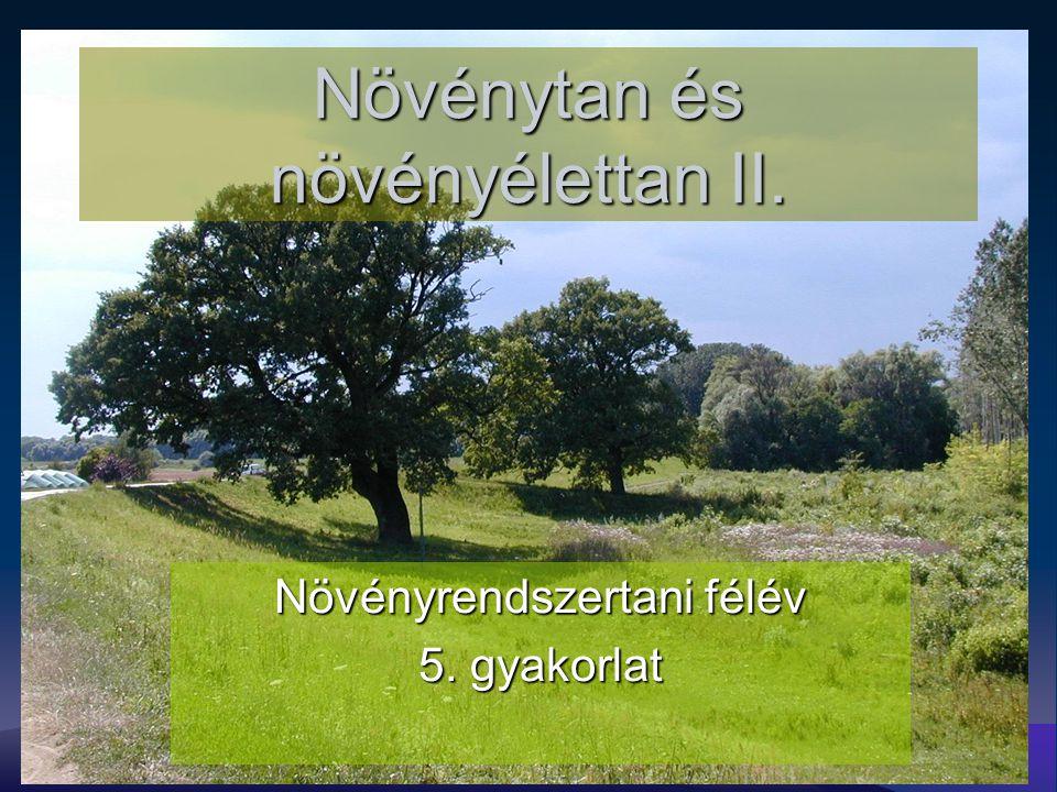 Növénytan és növényélettan II. Növényrendszertani félév 5. gyakorlat