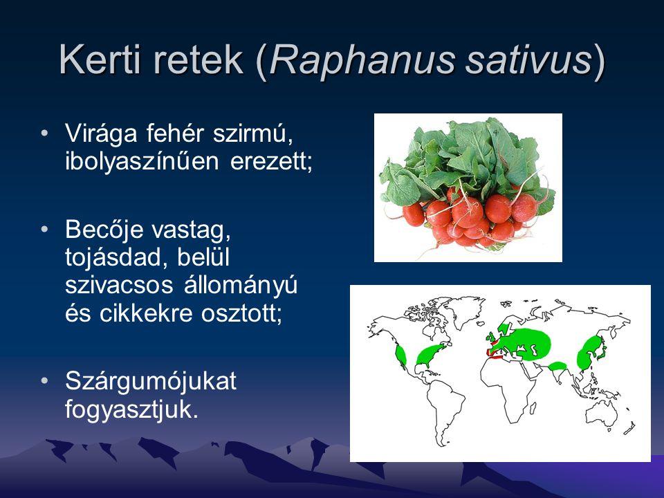 Kerti retek (Raphanus sativus) Virága fehér szirmú, ibolyaszínűen erezett; Becője vastag, tojásdad, belül szivacsos állományú és cikkekre osztott; Szárgumójukat fogyasztjuk.