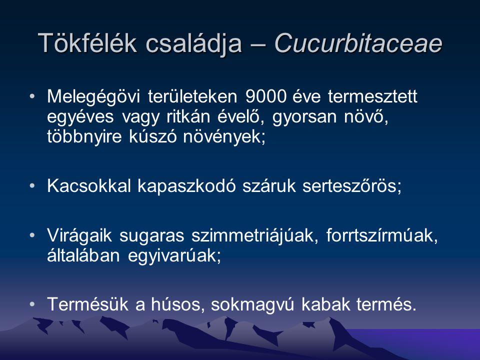 Tökfélék családja – Cucurbitaceae Melegégövi területeken 9000 éve termesztett egyéves vagy ritkán évelő, gyorsan növő, többnyire kúszó növények; Kacsokkal kapaszkodó száruk serteszőrös; Virágaik sugaras szimmetriájúak, forrtszírmúak, általában egyivarúak; Termésük a húsos, sokmagvú kabak termés.