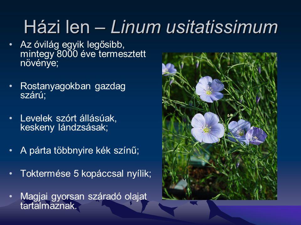 Házi len – Linum usitatissimum Az óvilág egyik legősibb, mintegy 8000 éve termesztett növénye; Rostanyagokban gazdag szárú; Levelek szórt állásúak, keskeny lándzsásak; A párta többnyire kék színű; Toktermése 5 kopáccsal nyílik; Magjai gyorsan száradó olajat tartalmaznak.