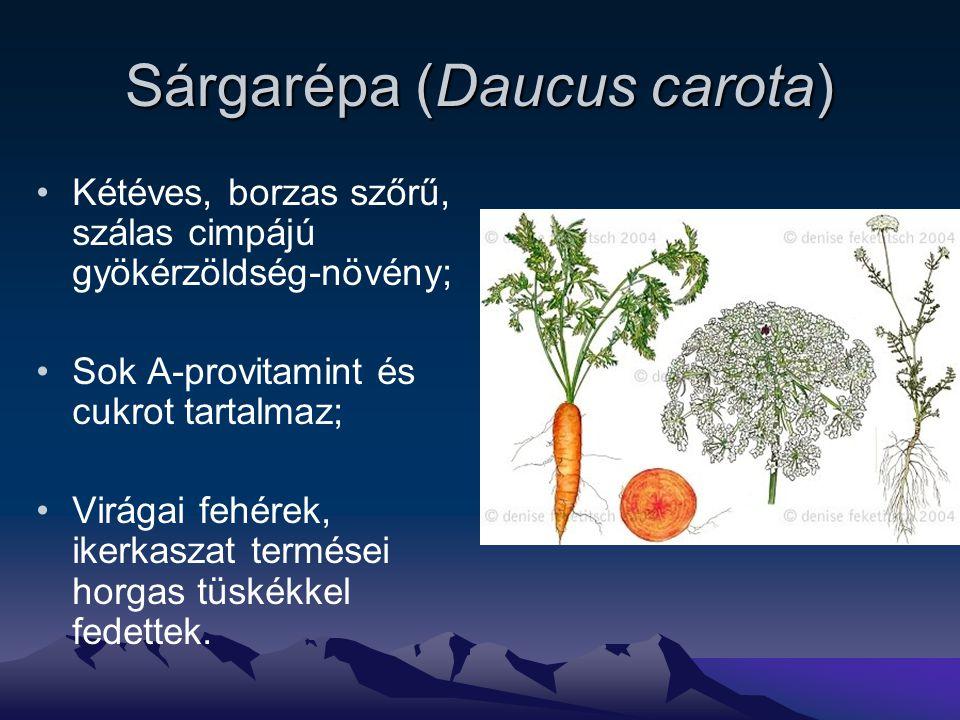 Sárgarépa (Daucus carota) Kétéves, borzas szőrű, szálas cimpájú gyökérzöldség-növény; Sok A-provitamint és cukrot tartalmaz; Virágai fehérek, ikerkaszat termései horgas tüskékkel fedettek.