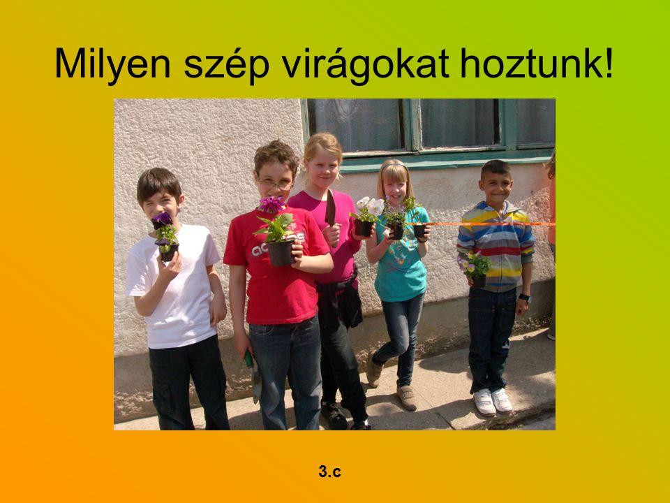 Milyen szép virágokat hoztunk! 3.c