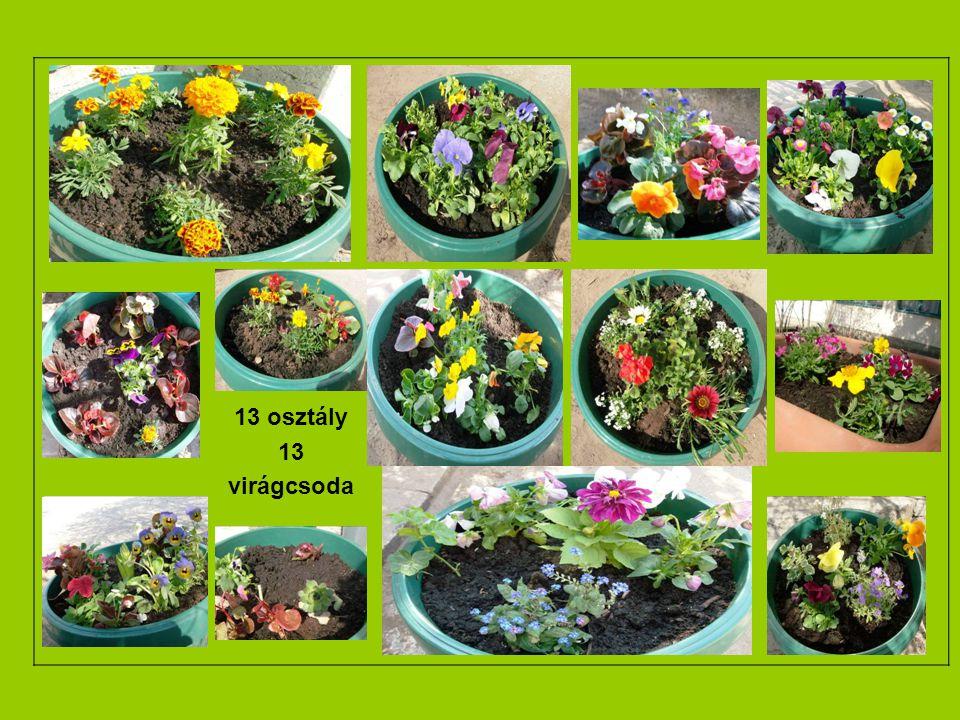 13 osztály 13 virágcsoda