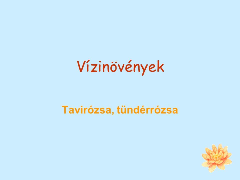 Vízinövények Tavirózsa, tündérrózsa