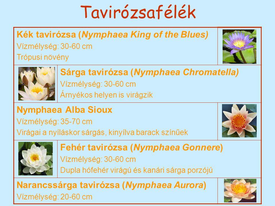 Tavirózsafélék Kék tavirózsa (Nymphaea King of the Blues) Vízmélység: 30-60 cm Trópusi növény Sárga tavirózsa (Nymphaea Chromatella) Vízmélység: 30-60