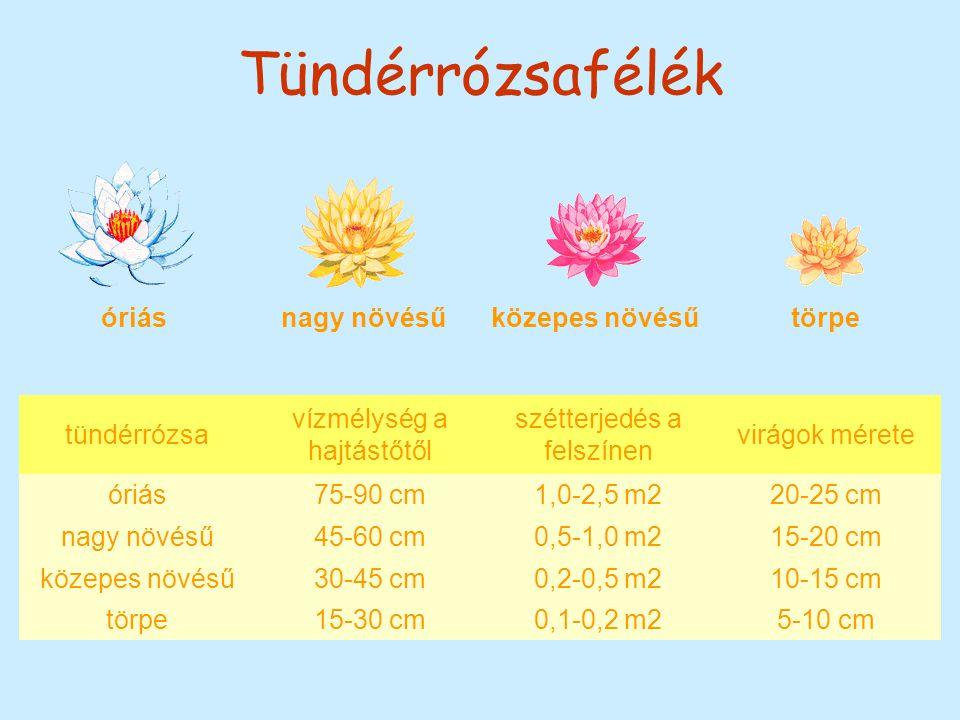 Tündérrózsafélék óriás nagy növésűközepes növésű törpe tündérrózsa vízmélység a hajtástőtől szétterjedés a felszínen virágok mérete óriás75-90 cm1,0-2