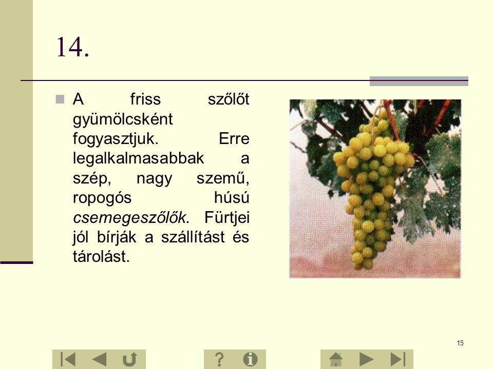 14 13. A szőlőszem vékony, bőrszerű héján belül lédús gyümölcshús van. Ebben ülnek a magvak. Az ilyen termés a bogyótermés. A bogyók fürtöt, azok pedi