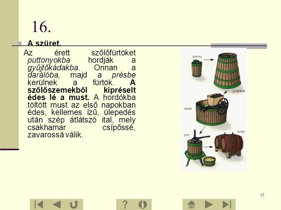 16 15. Hogyan lesz a szőlőből bor? A szőlő sokféleképpen hasznosítható, legnagyobb jelentőségét mégis a bortermesztés adja. A bort elsősorban a borsző
