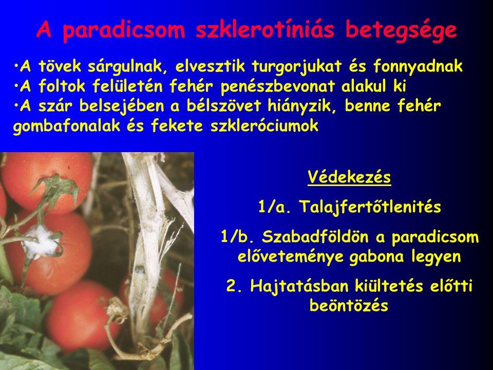 A paradicsom szklerotíniás betegsége Védekezés 1/a. Talajfertőtlenités 1/b. Szabadföldön a paradicsom előveteménye gabona legyen 2. Hajtatásban kiülte
