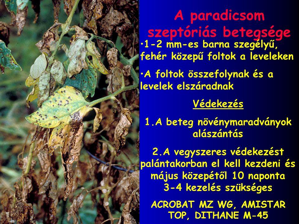 A paradicsom szeptóriás betegsége 1-2 mm-es barna szegélyű, fehér közepű foltok a leveleken A foltok összefolynak és a levelek elszáradnak Védekezés 1