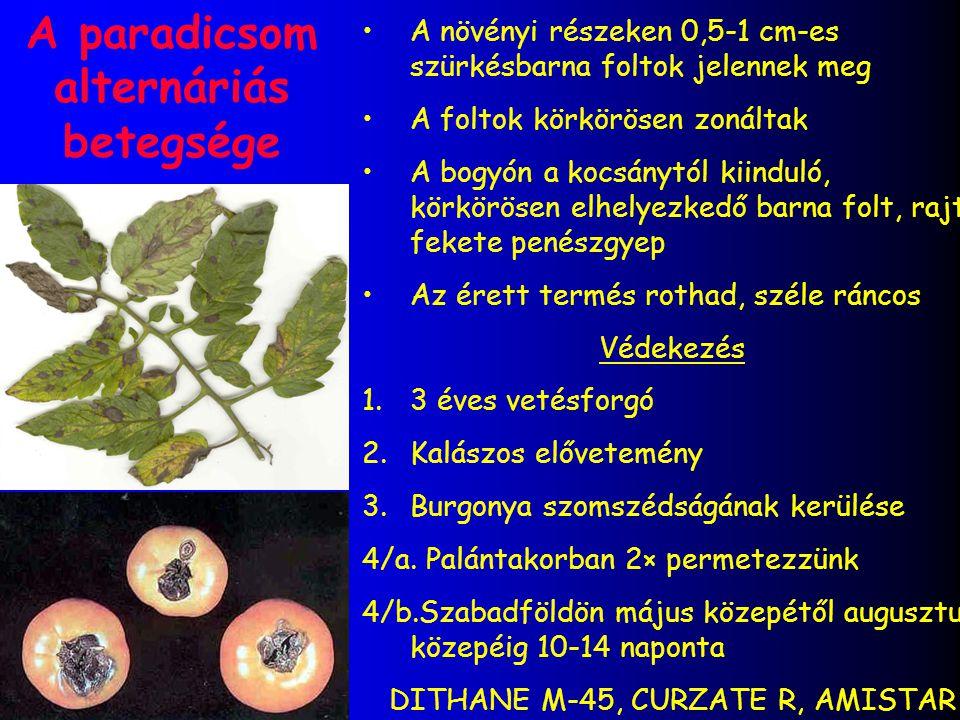 A paradicsom alternáriás betegsége A növényi részeken 0,5-1 cm-es szürkésbarna foltok jelennek meg A foltok körkörösen zonáltak A bogyón a kocsánytól