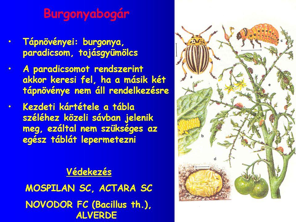 Burgonyabogár Tápnövényei: burgonya, paradicsom, tojásgyümölcs A paradicsomot rendszerint akkor keresi fel, ha a másik két tápnövénye nem áll rendelke
